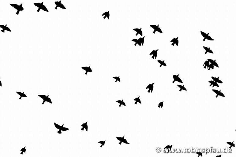 birds in the sky -
