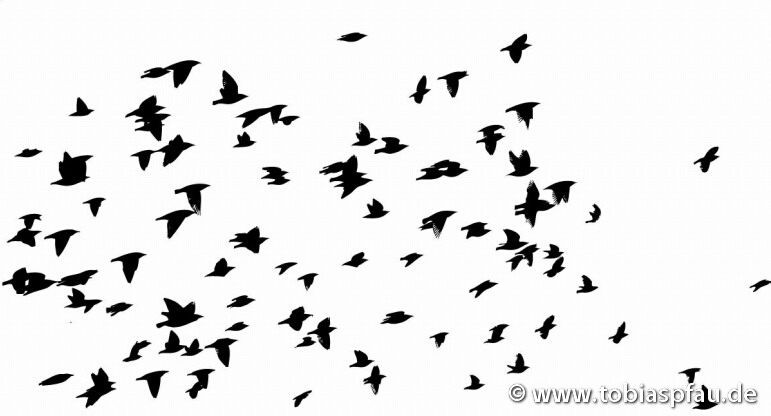 flying birds -