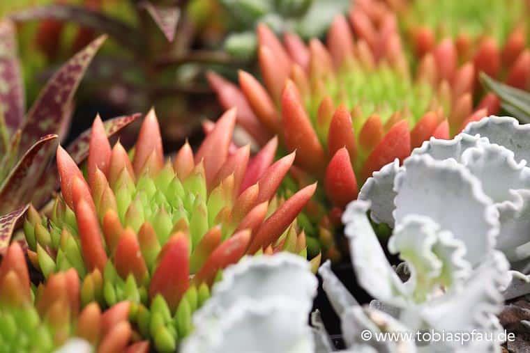 Pflanzen Auf Stein : pflanzen auf stein fotos videos wallpaper ~ Frokenaadalensverden.com Haus und Dekorationen