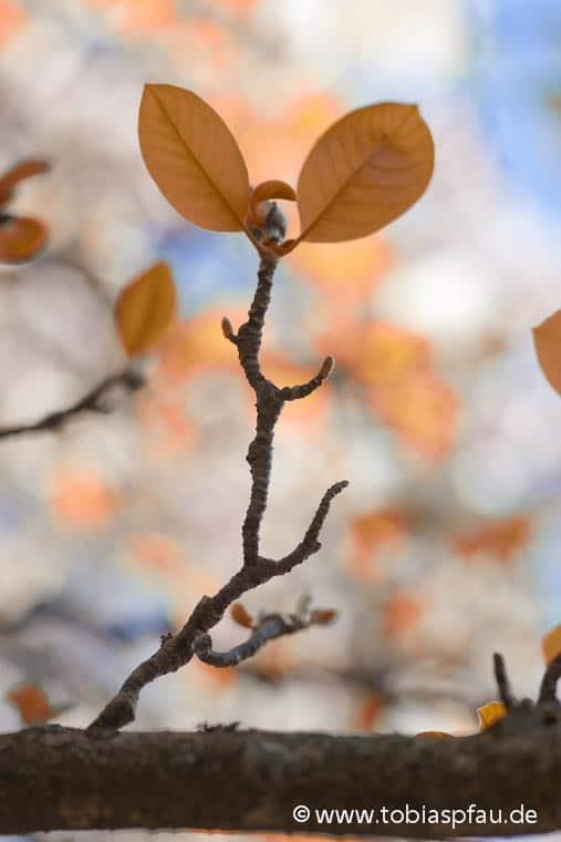 wpid6798 IMG 0314 n2Blur Leaf
