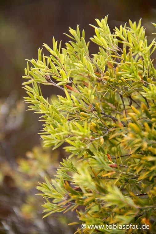 wpid7053 IMG 0340Wild Bush Grass Lake Birabeen