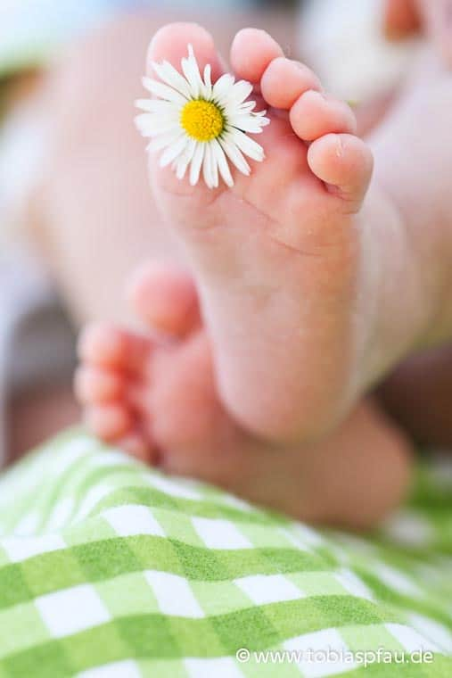 Baby Feet Holding Daisy in spring