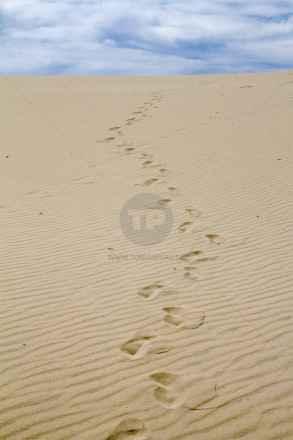 tpfau IMG 0092 Fraser Island