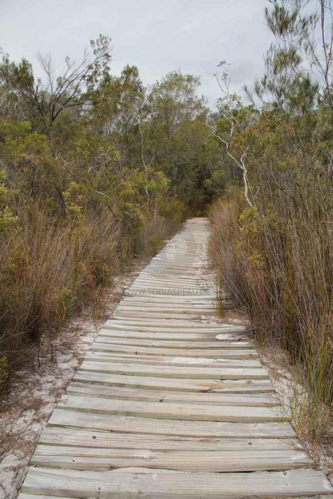 tpfau IMG 0333 Fraser Island Australien