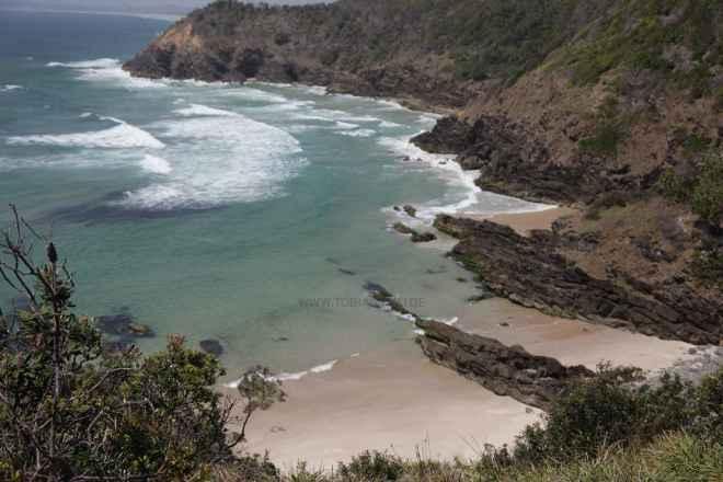 tpfau IMG 6668 Australien Ost Küste