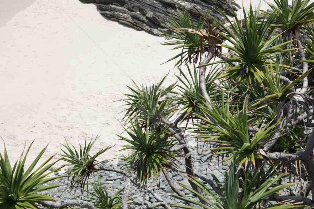tpfau IMG 6890 Meer Australien