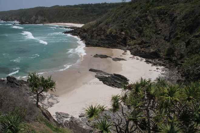 tpfau IMG 7978 Australien Ost Küste
