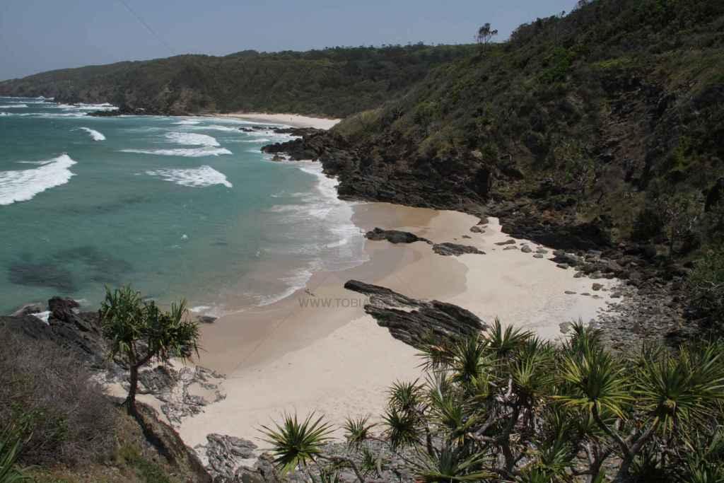 tpfau IMG 7983 Australien Ost Küste