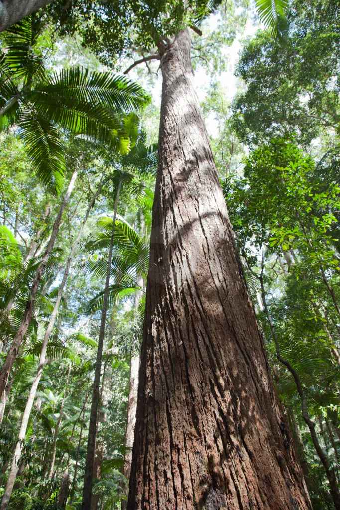 tpfau IMG 9022 Tropical Forrest