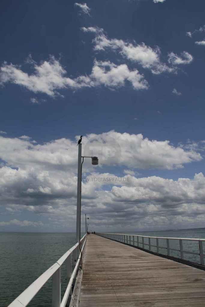 tpfau IMG 9031 Fraser Island Explorer Tours Australien