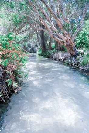 tpfau IMG 9309 Fraser island white greek