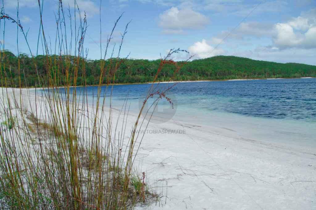 tpfau IMG 9692 fraser Island Lake McKenzie