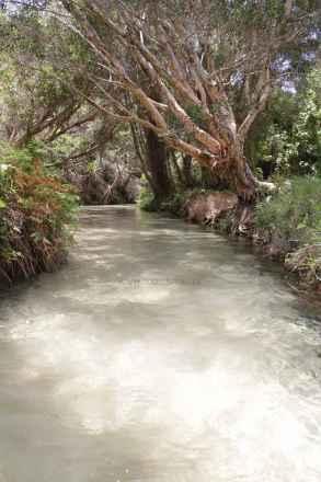 tpfau IMG 9748 Fraser Island greek