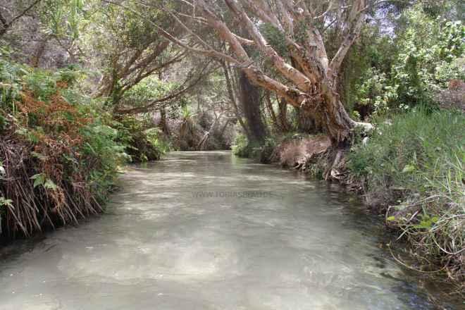 tpfau IMG 9752 Fraser Island greek