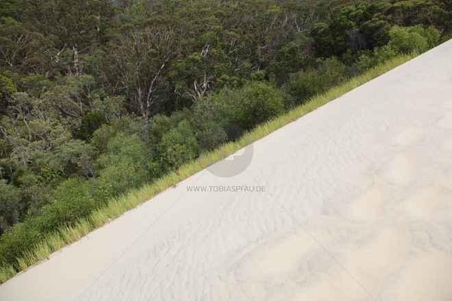 tpfau IMG 9872 Fraser Island Australien
