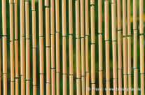 bamboo cane – Bambus am Seil aufgehangen