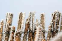 Schneestangen – Eiskristalle