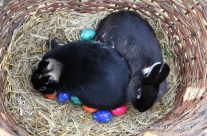 Osterhase / Easter bunny