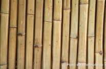 Bambusrohre, Stangen als Hintergrund