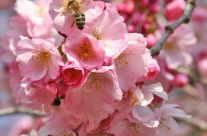 Die ersten Blüten am Obstbaum