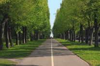 Eine grüne Allee / The green alley