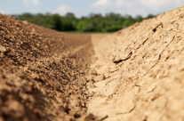 Trockene Erde / dried Soil