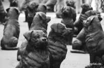 Rottweiler Hunde