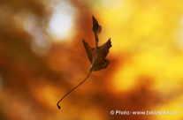 Blatt im Wind – Herbst