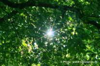 Sonne scheint durch Blätterdach