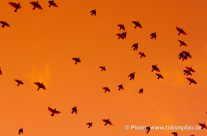 Richtung Süden – Vogelwanderung