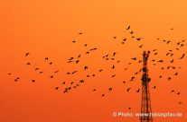 Zugvögel nähe eines Sendemasten