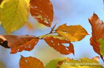 Herbstlaub – bunte Farben Makroaufnahme