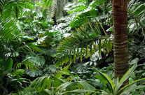 Palmen Wald