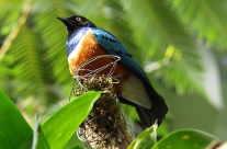 Vogel Mangrove