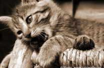 morde moi – freche Katze
