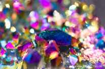 Farbige Kristalle / colored crystals