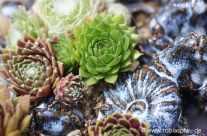 Pflanzen auf Fossilien