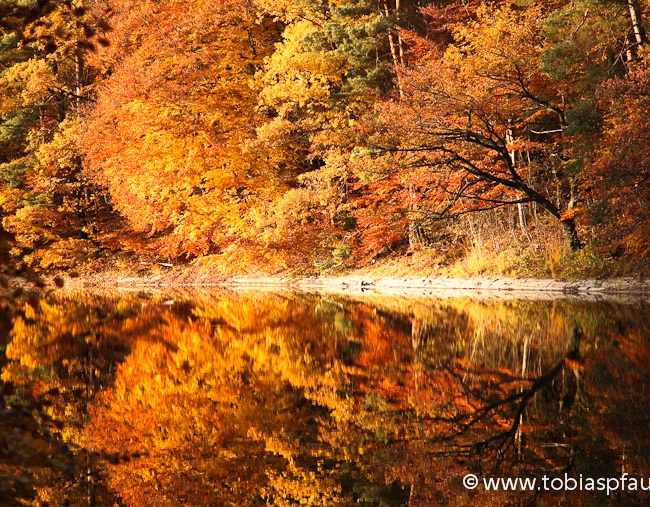 goldener Herbst – golden autumn