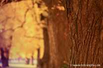 Baumstamm im Herbstlicht