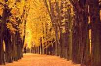 Herbst Blätter Baumallee