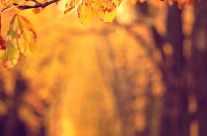 Herbstlaub tiefenunschärfe