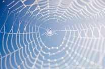Spinnennetz – Morgentau