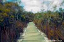 Walking Paths – Lake Mc Kenzie