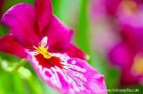 Garten Orchideen