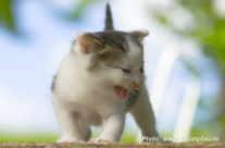 Freche Katze / naughty baby kitty