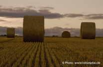 wheat – strawrolls / Strohrollen