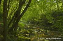 Wald ende Sommer