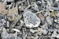Korallen Teile und Muscheln