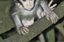 Affenbaby / monkey baby